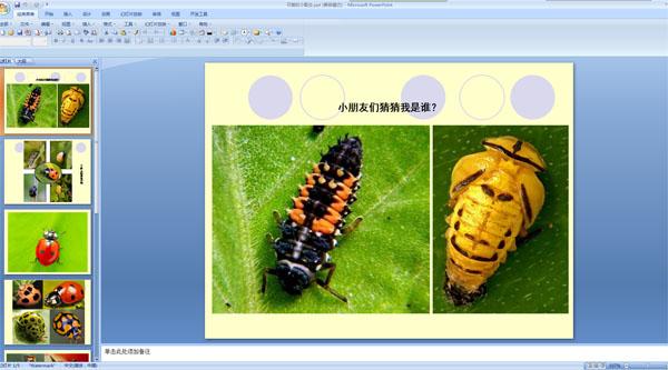 小瓢虫的成长过程