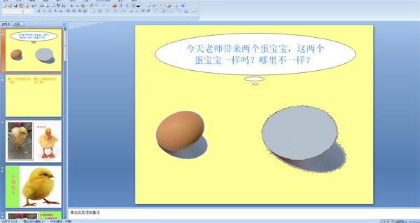 幼儿园小班科学:小鸡和小鸭