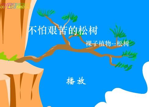 幼儿园科学:不怕艰苦的松树