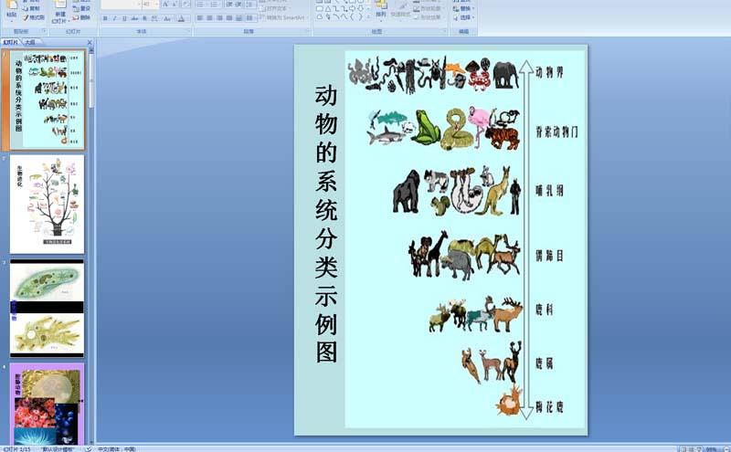 动物的系统分类示例图