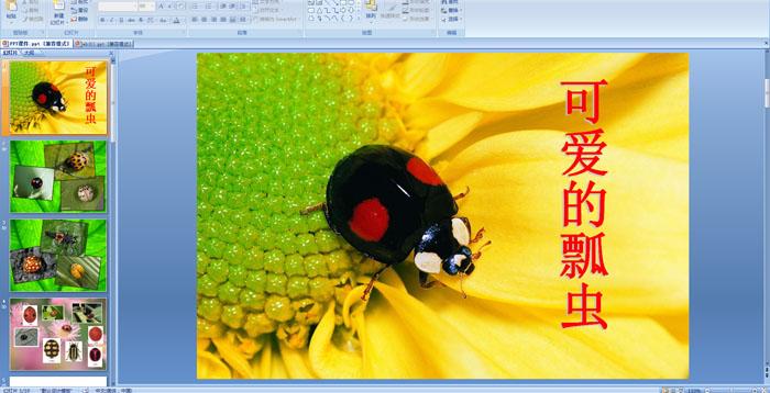 幼儿园中班美术活动:可爱的瓢虫